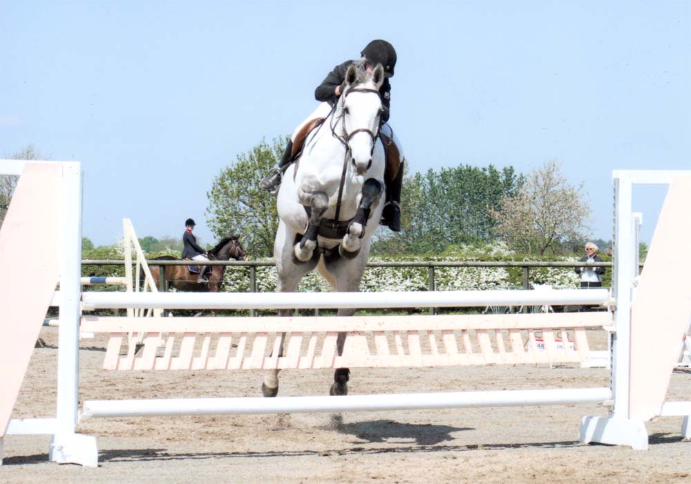 Horses Jumping